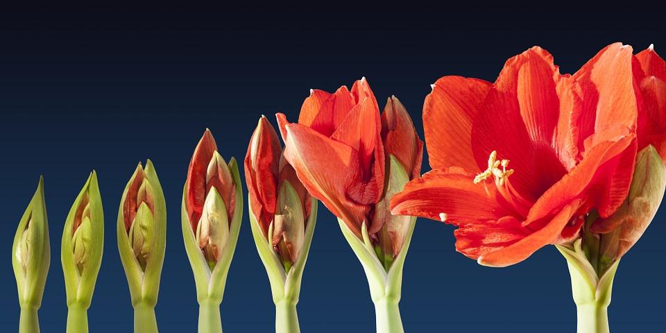 grow, blosson